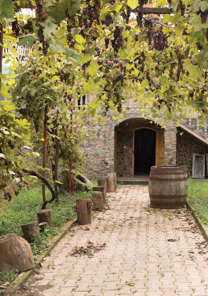 Die wunderbare Welt der Weine, Weinbau, georgische Reben