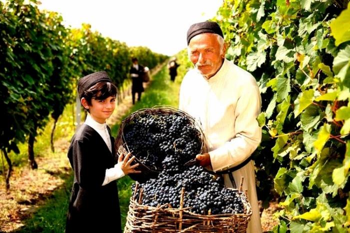 Rtweli - Weinlese in Georgien, georgische Trauben